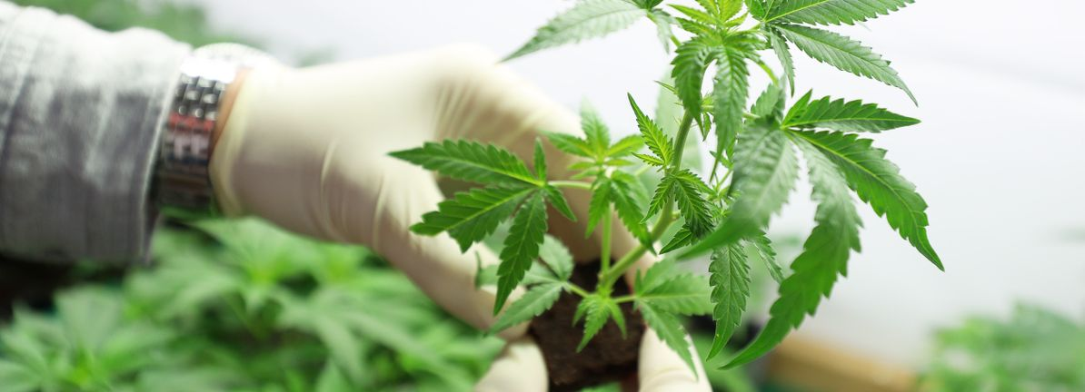 Is Aurora Cannabis Inc. (TSE:ACB) Overpaying Its CEO? - Simply Wall St